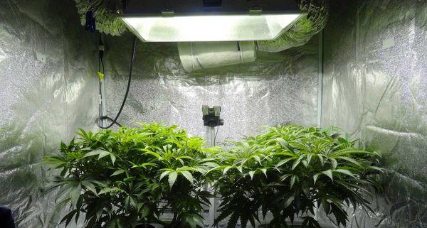 Гроутенты – новый способ выращивать уникальные растения дома
